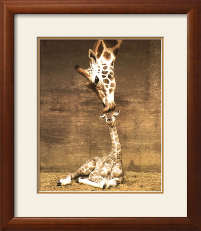 """First Kiss"" Giraffe Framed Print"